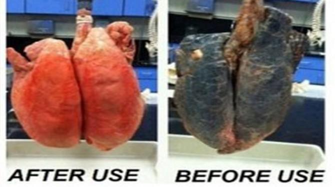 wat doet je lever