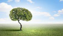 6 TIPS OM UW GEHEUGEN TE BEHOUDEN OF ZELFS TE VERBETEREN