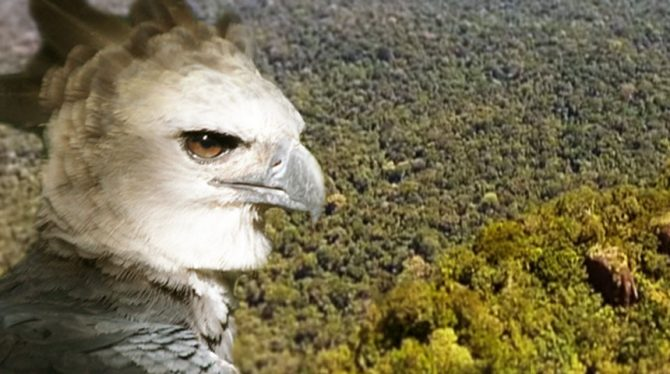 7 QUALITIES OF AN HARPY EAGLE EVERY SMART LEADER DEVELOPS